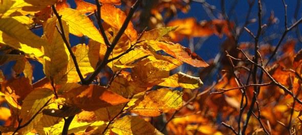 Parkway Colors (c) 2010 Amberwood Media Group