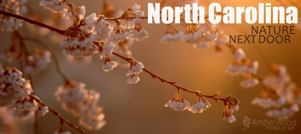 NC Nature Next Door, (c) 2006 Amberwood Media Group